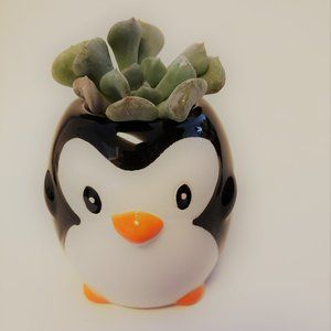 Other - Penguin Planter with Echeveria Succulent